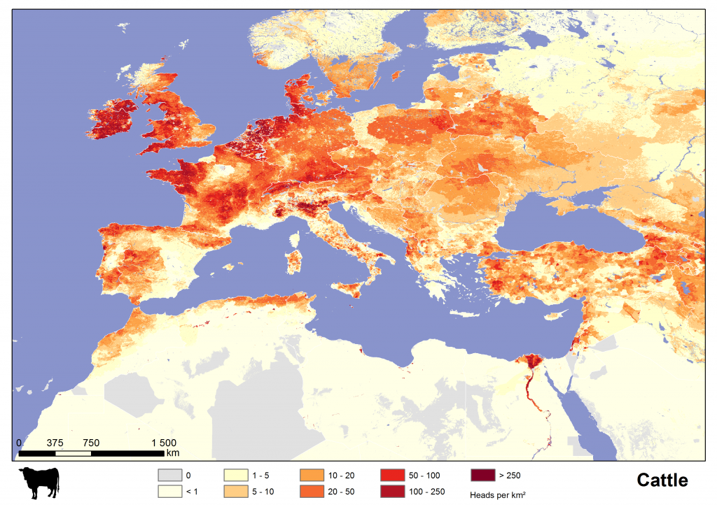 Cattle in Europe