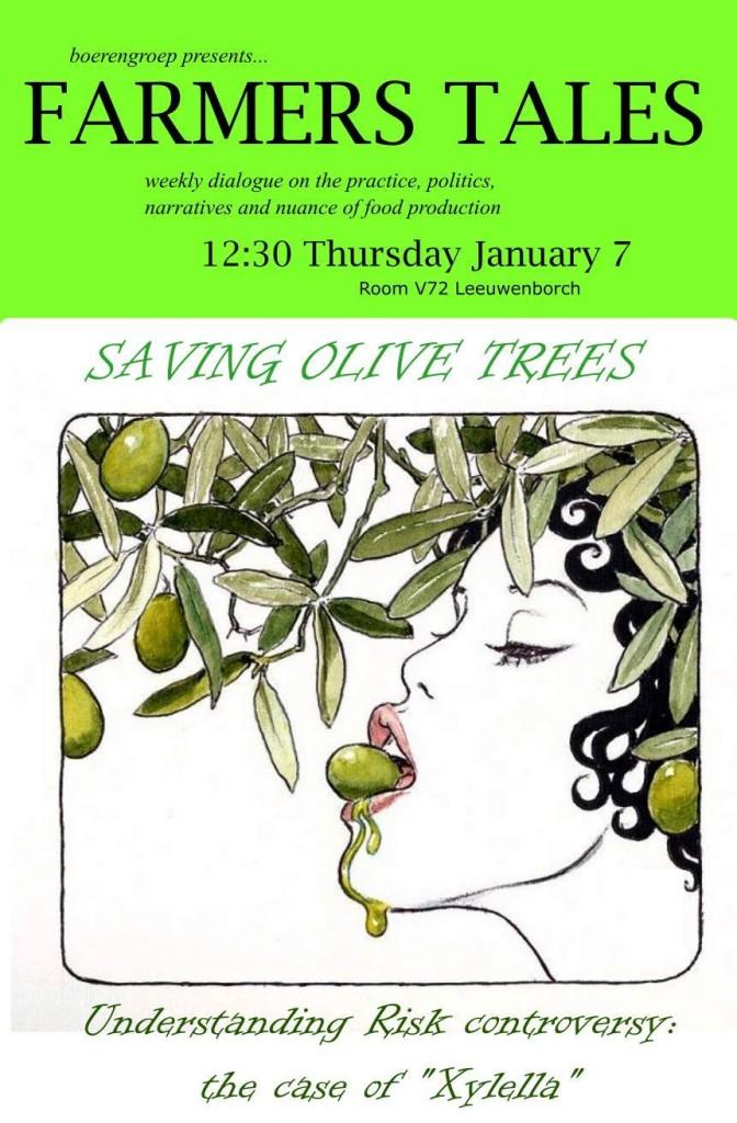 160107 Olive Trees